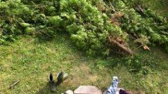 Arbor Vitae, The Garden